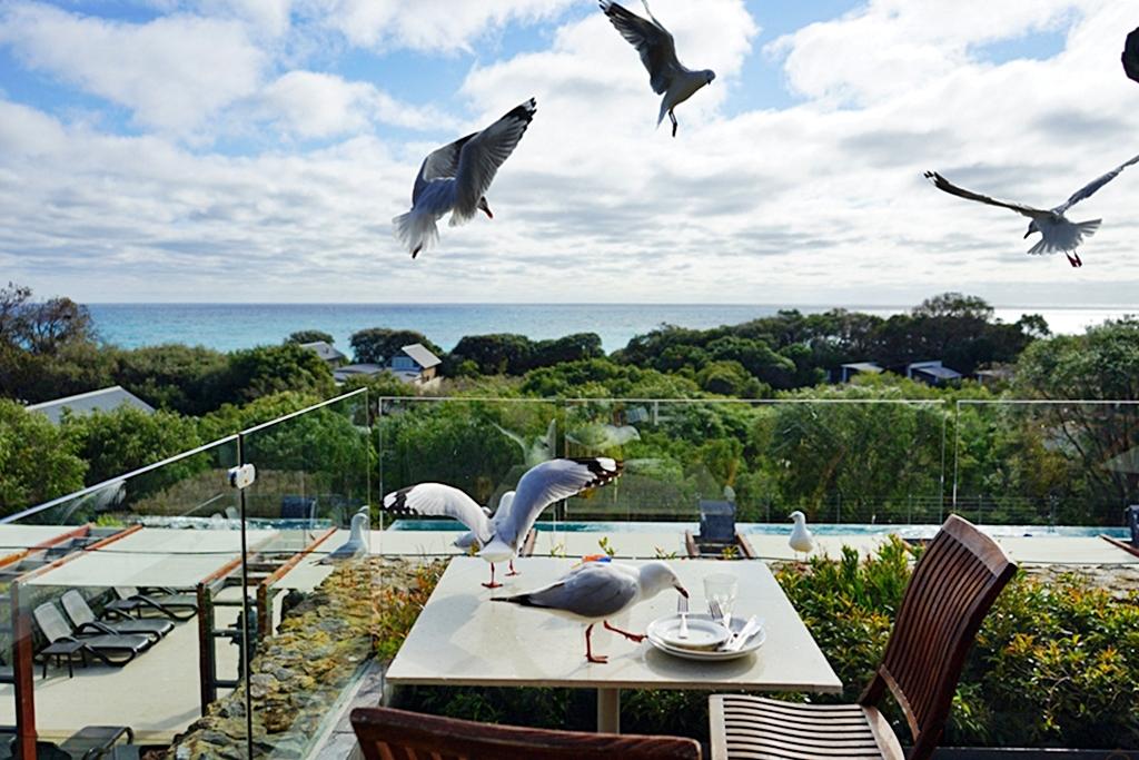 『澳洲。西澳』 Bunker Bay推薦住宿 五星級Pullman Bunker Bay Resorts |邦克爾灣(Bunker Bay)海景第一排 倚水而建獨棟Villa 夜晚有超壯觀滿天星空 蛙鳴鳥叫不絕於耳 有著純樸的大自然生態 還有無敵海景游泳池| 雄獅 玩轉西澳 七日 粉紅湖 沙漠小探險之旅