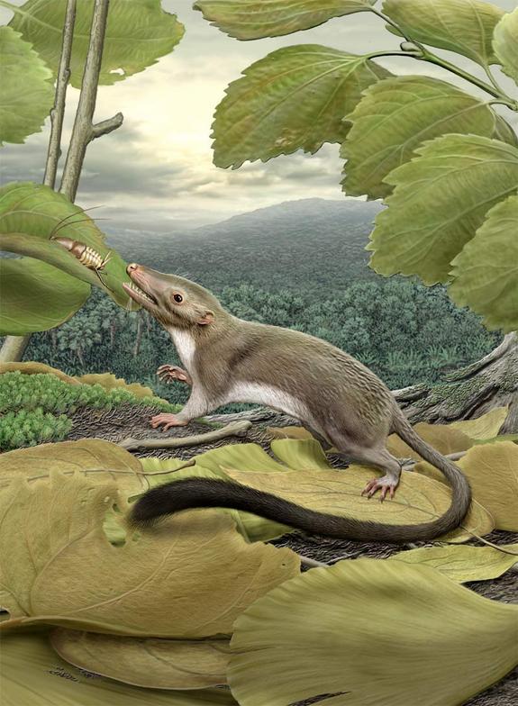 [Image: ancestor-placental-mammals.jpg1360252387]