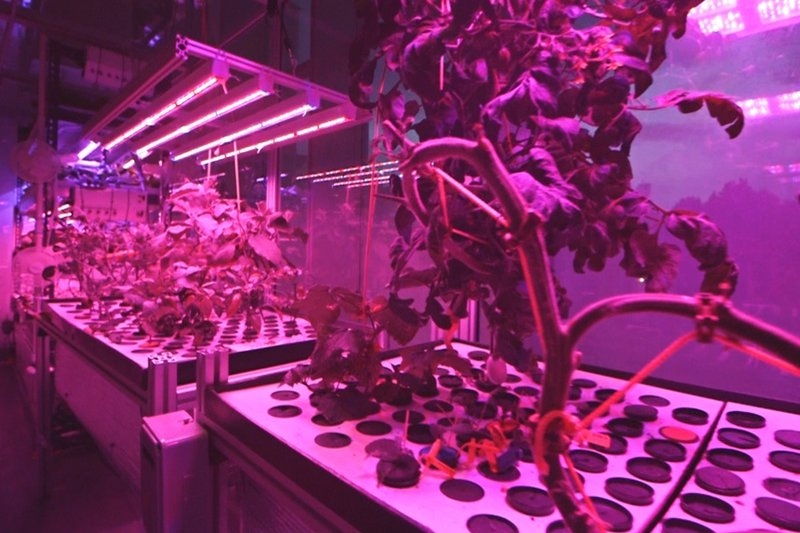 How to feed the cities of the future