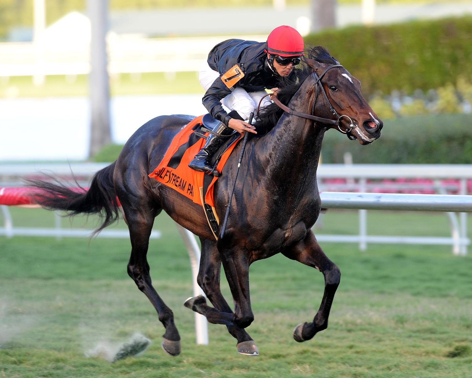 In this photo provided by Gulfstream Park, Mr. Speaker, with Jose Lezcano aboard, captures the Dania Beach Stakes horse race at Gulfstream Park in Hallandale Beach, Fla., Saturday, Dec. 21, 2013