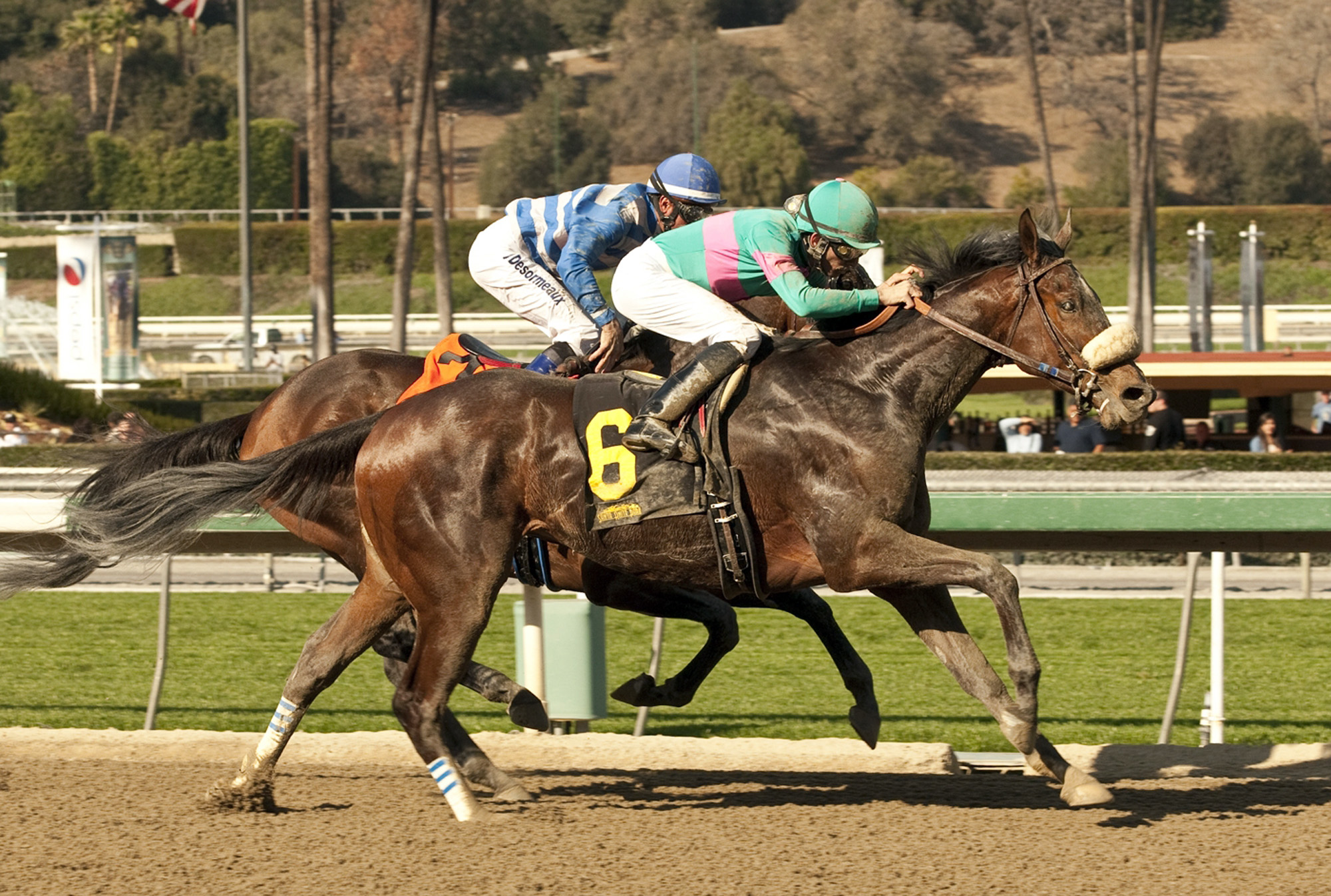 In this image provided by Benoit Photo, Blingo (6), with Aaron Gryder aboard, wins the Grade II San Antonio Stakes horse race past Imperative, with Kent Desormeaux aboard, on Saturday, Feb. 8, 2014, at Santa Anita Park in Arcadia, Calif