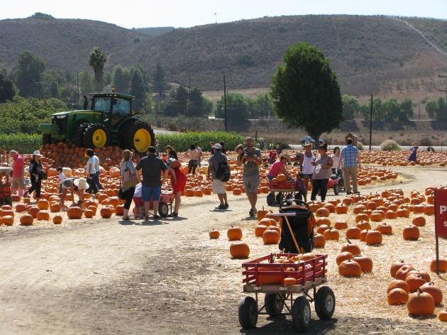 Underwood Family Farms Pumpkin Patch -- Access Hollywood