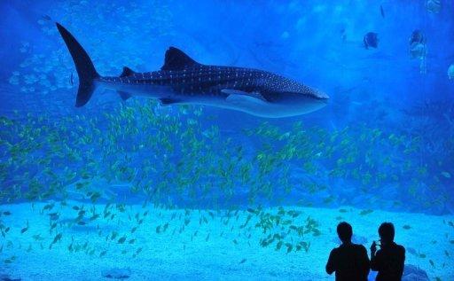 gambar ikan hiu terdampar, hewan laut terdampar di pantai, makhluk raksasa di samudera