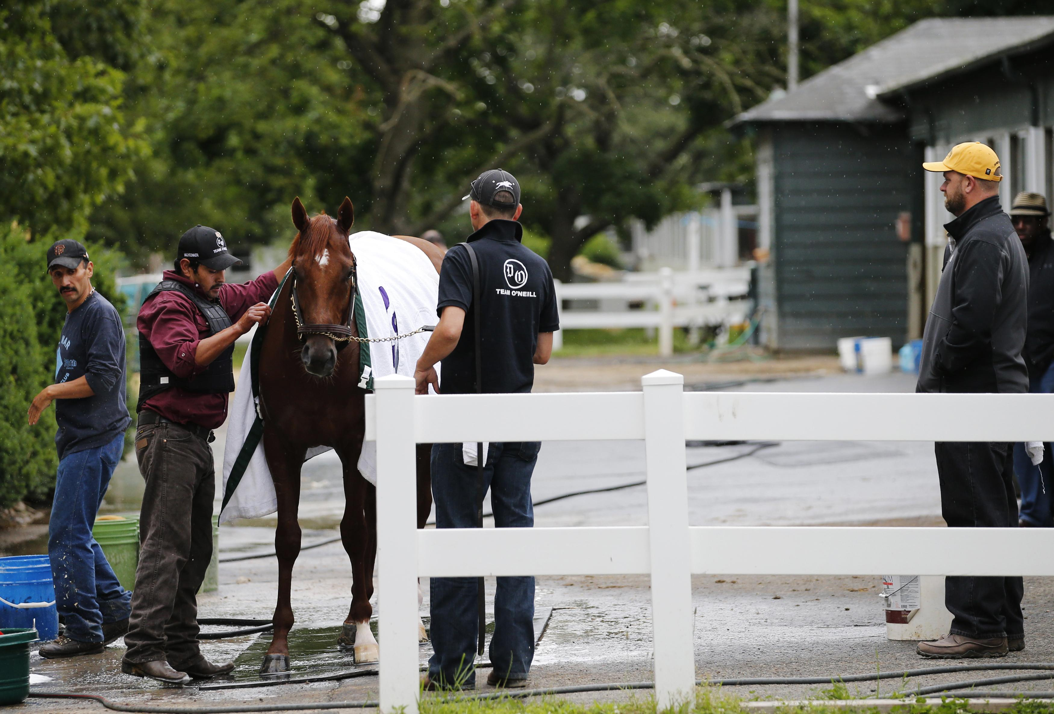 Trainer Doug O'Neill (R) looks on as I'll Have Another is washed after a morning workout at Belmont Park. (Reuters)
