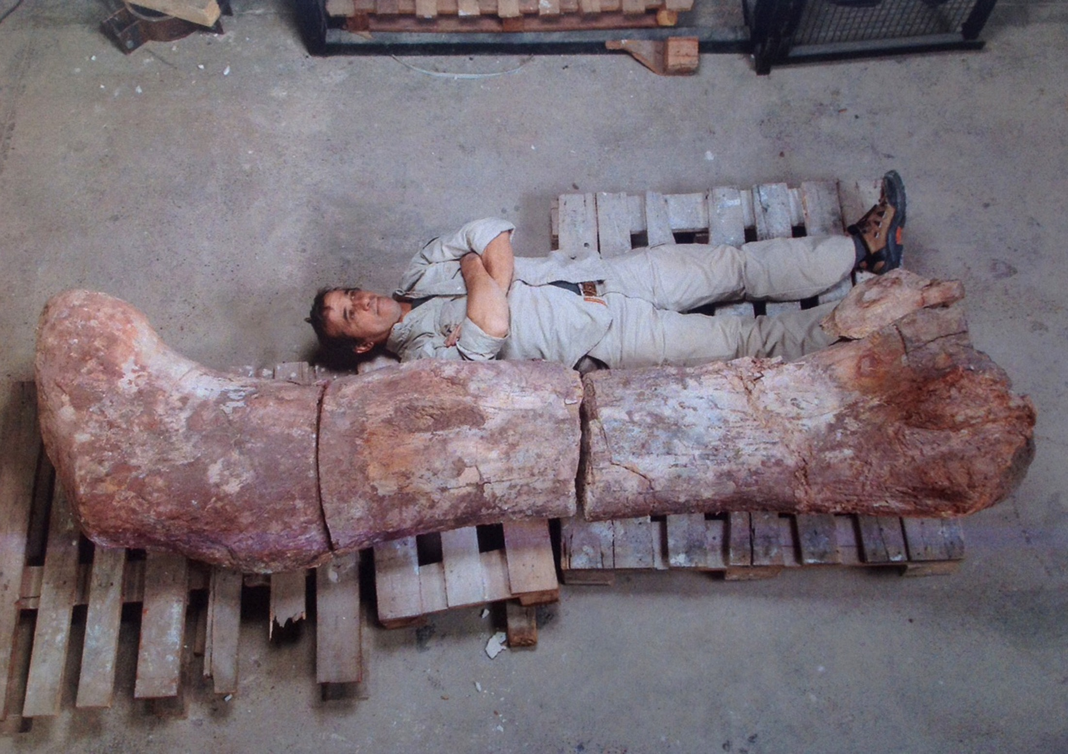 If a Dinosaur Can Reach 65 Feet in Hight Then There is No Reason to Think That a Nephilim Couldn't Do The Same!!! (see article inside) 2014-05-17T201936Z_1655790300_GM1EA5I0BRB01_RTRMADP_3_ARGENTINA