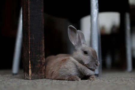 Venezuela's new plan to beat hunger: Breed rabbits