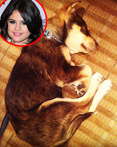 "Selena Gomez's Puppy Baylor Is ""Sick,"" Needs Surgery"