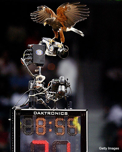 Ca-caw? The Atlanta Hawks 'sorta miss' their hawk