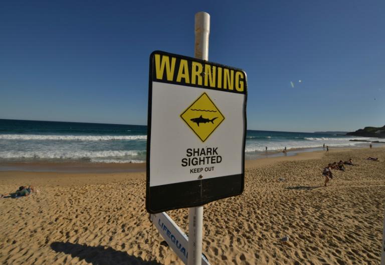 Diver killed in Australia shark attack
