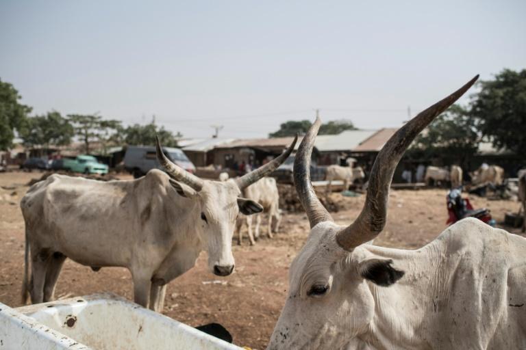Gunmen kill 16 villagers in northern Nigeria: officials