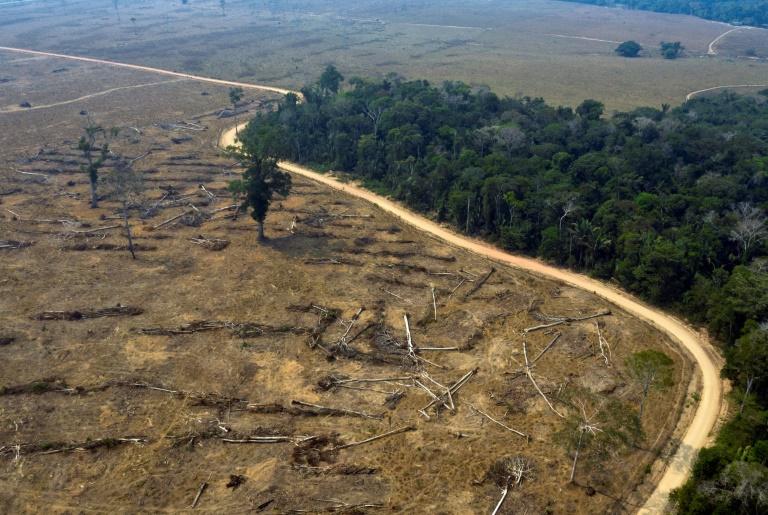 Brazil farmers deforesting Amazon to survive