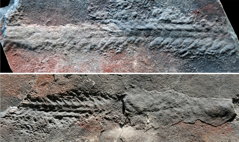 The worm that turned: fossils shed light on early animal movement