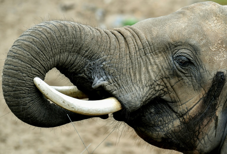 Foreigners arrested with ivory bracelets at Kenyan airport