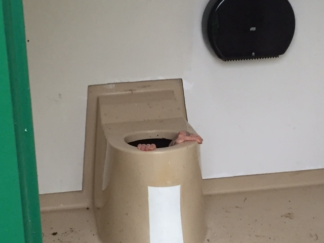 Down in the dumps: Norway man stuck down loo over lost phone