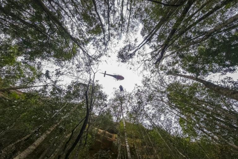 Secret mission saves Australias dinosaur trees from bushfires