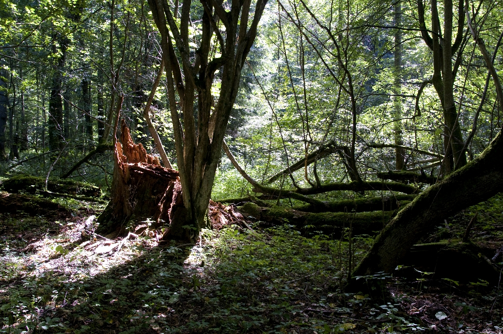 EU court threatens Poland with heavy fines over ancient forest logging