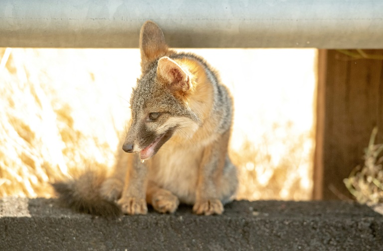 Trump administration re-authorizes cyanide bombs to kill wildlife