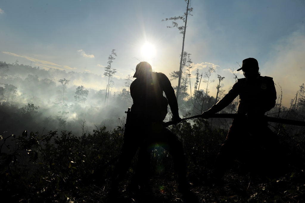 Indonesia expands protection for peatlands