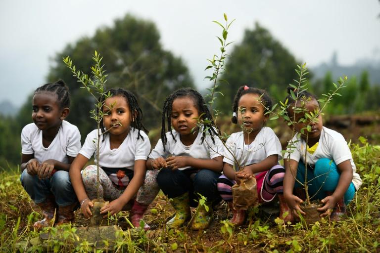 Going green: Ethiopias bid to plant four billion trees