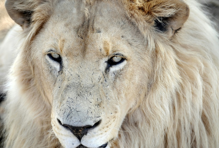French supermarket managers ousted over safari hunting snaps