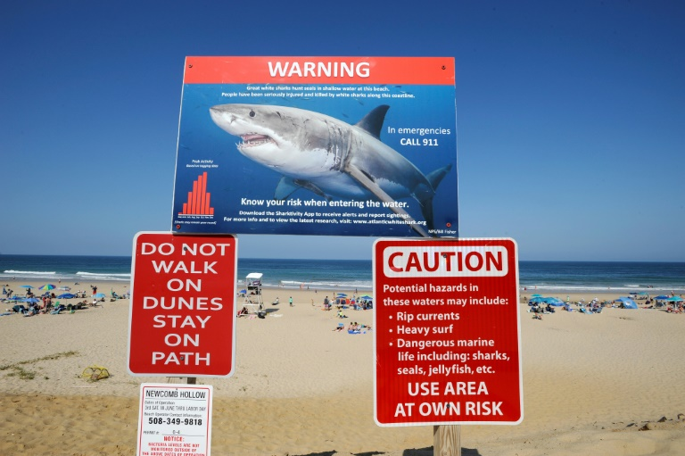 Wary US swimmers share waves with deadly sharks off Cape Cod