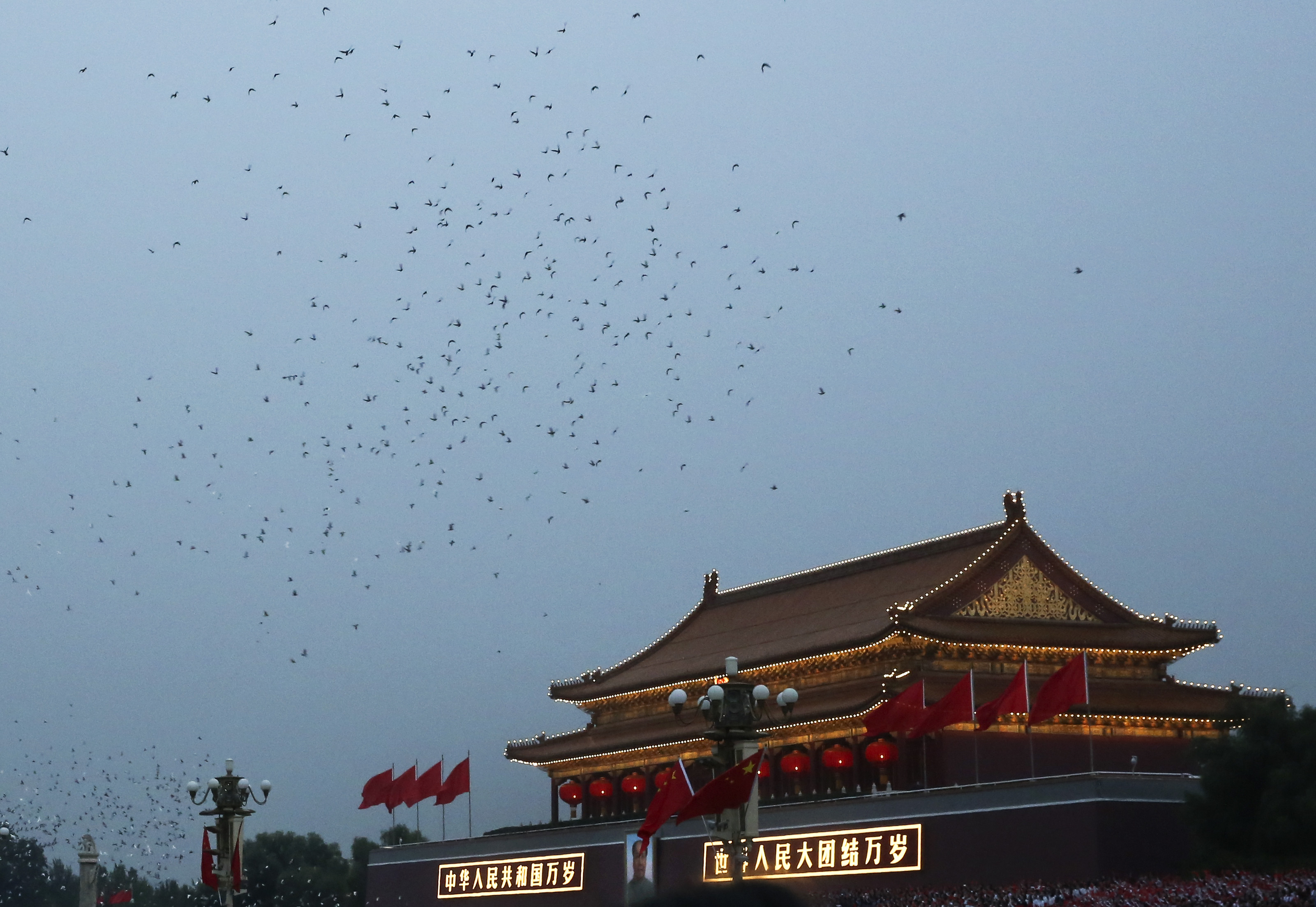 China body-searches 10K pigeons released for holiday celebration: reports