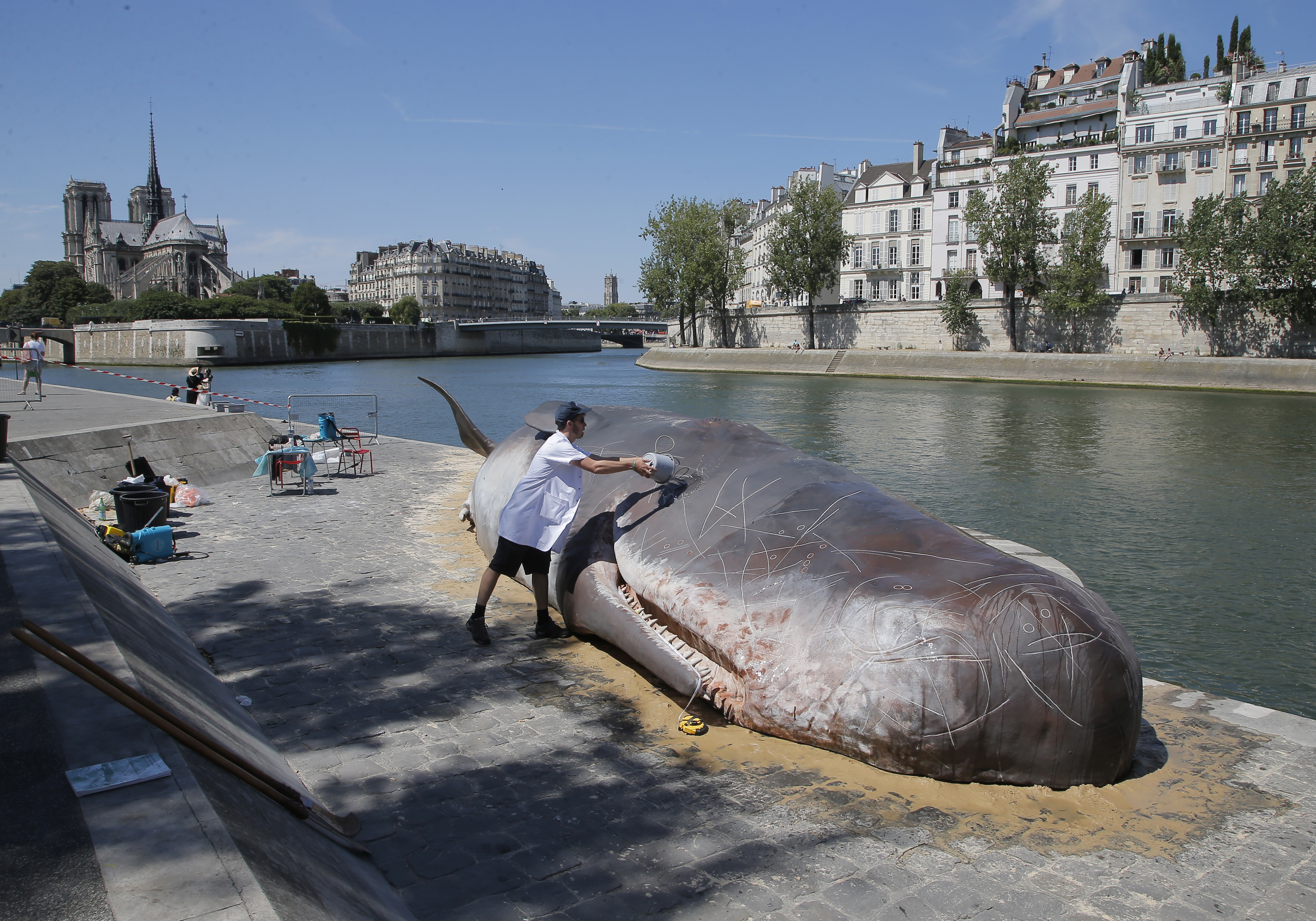 Is that really a beached whale beneath Paris' Notre Dame?