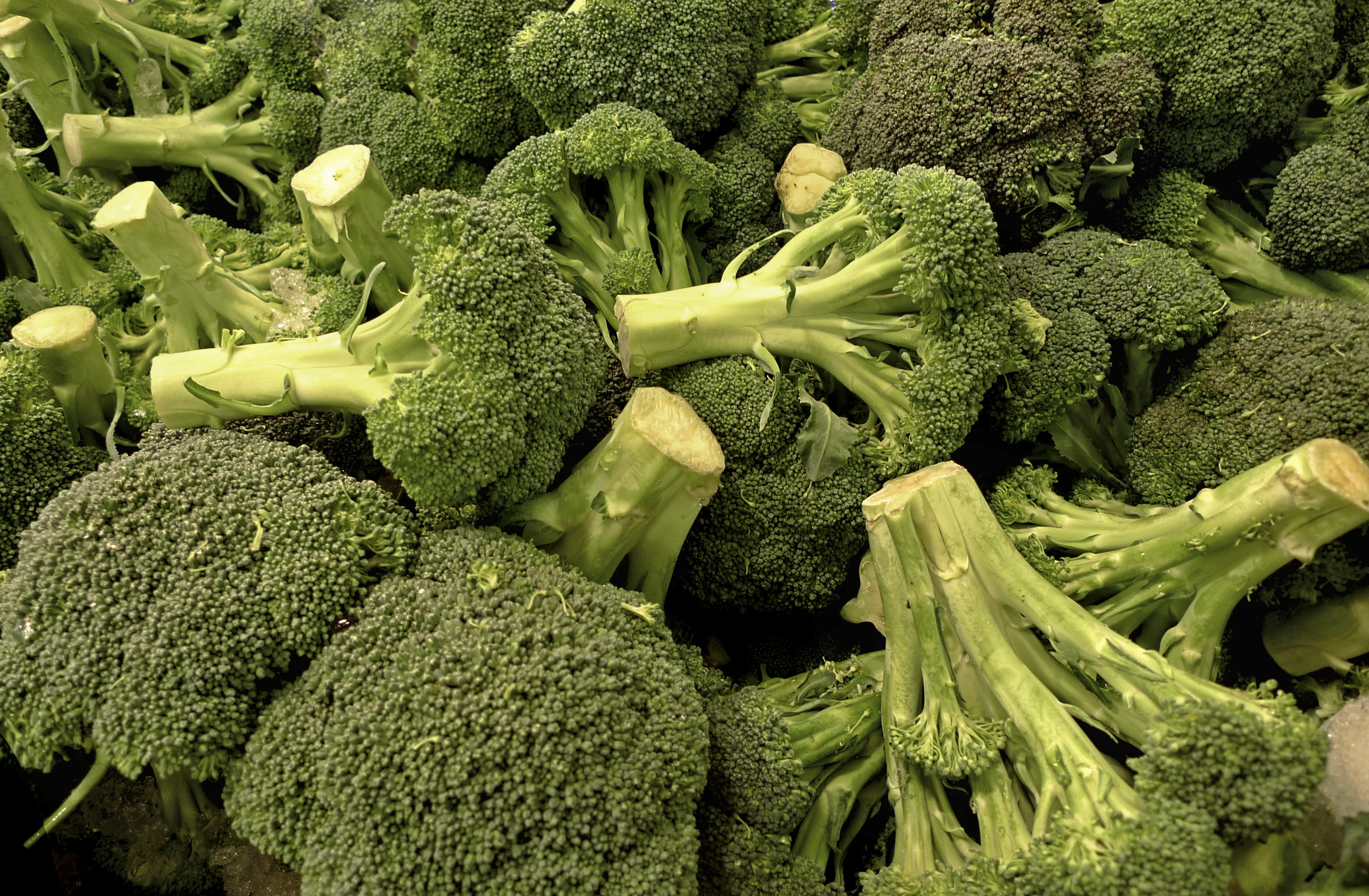 FILE – In this March 20, 2009, file photo mounds of fresh broccoli are on display in the produce section of an Arlington, Va., grocery.