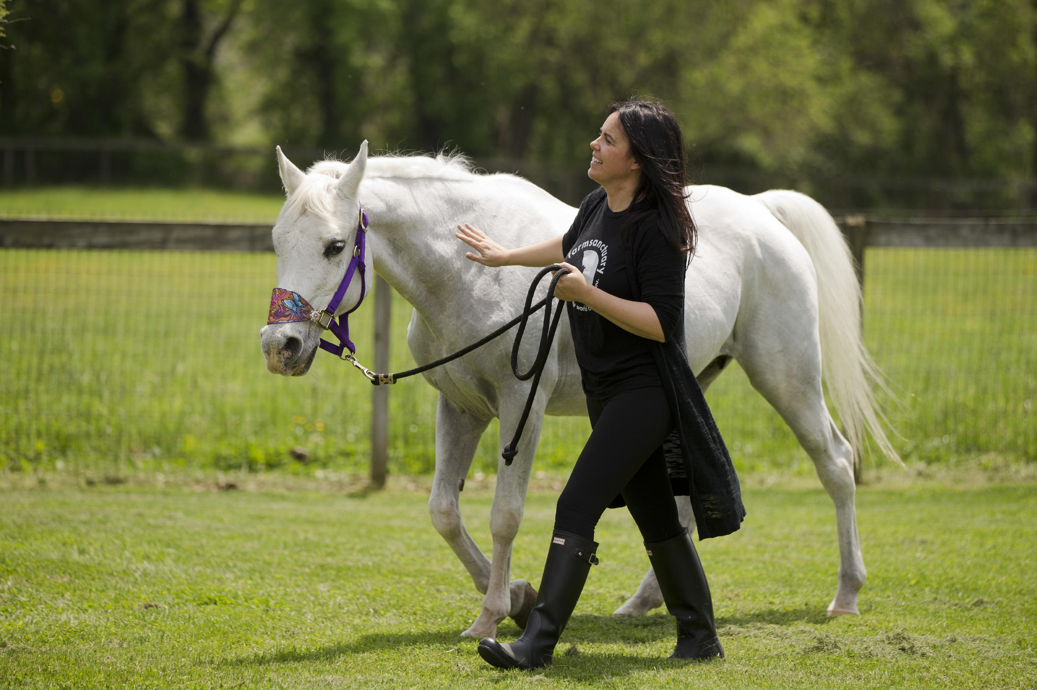 Jon Stewart adopts paint-covered horse; ex-owner backs care