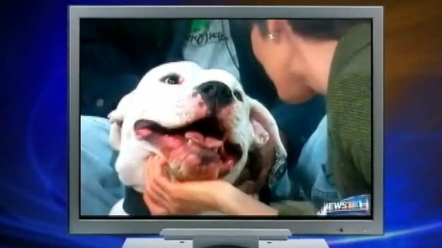 News Anchor Bitten by Dog Received 70 Stitches, Mouth Stitched Shut (ABC News)