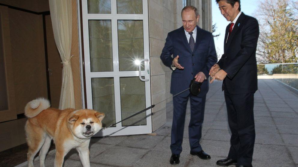 Vladimir Putin Dog Buffy Putin Brought His Own Dog