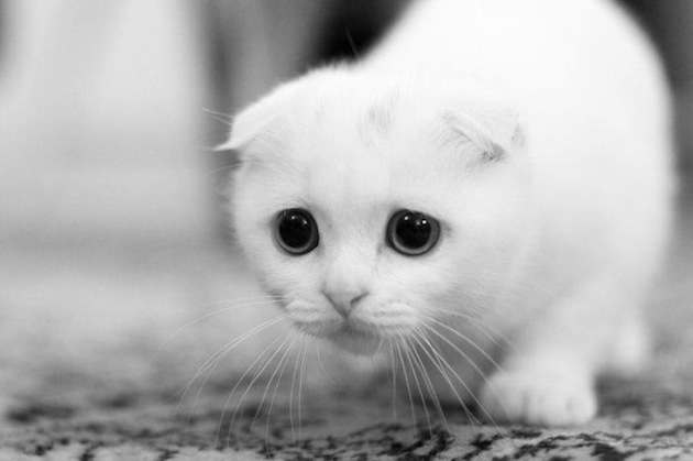 shy-cat