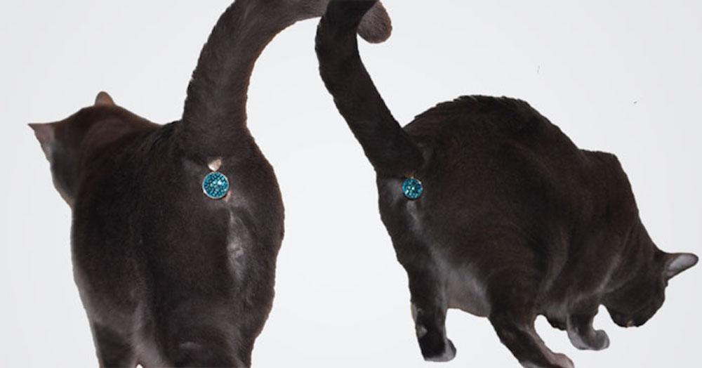 Bijoux D'anus