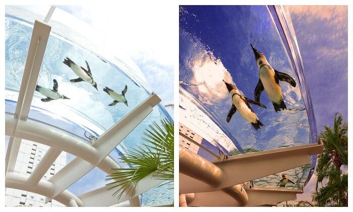 陽光水族館環狀空中庭園展區