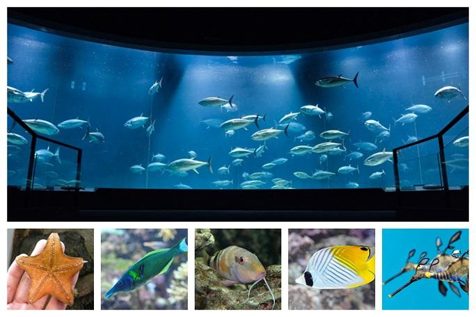 葛西臨海水族園動物