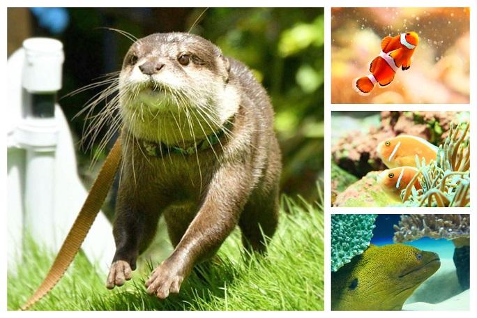 陽光水族館動物