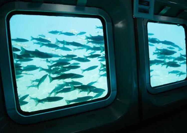 ▲遇到了石斑魚魚群!眼前游過數不盡的石斑魚,這景色好壯觀!