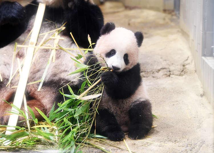 【上野動物園完全指南】人氣亮點&美食、伴手禮及服務情報大解析