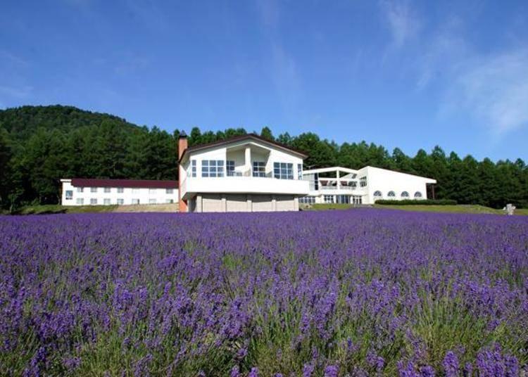 「薰衣草花海」就是露天溫泉飯店前方的那一片薰衣草田。