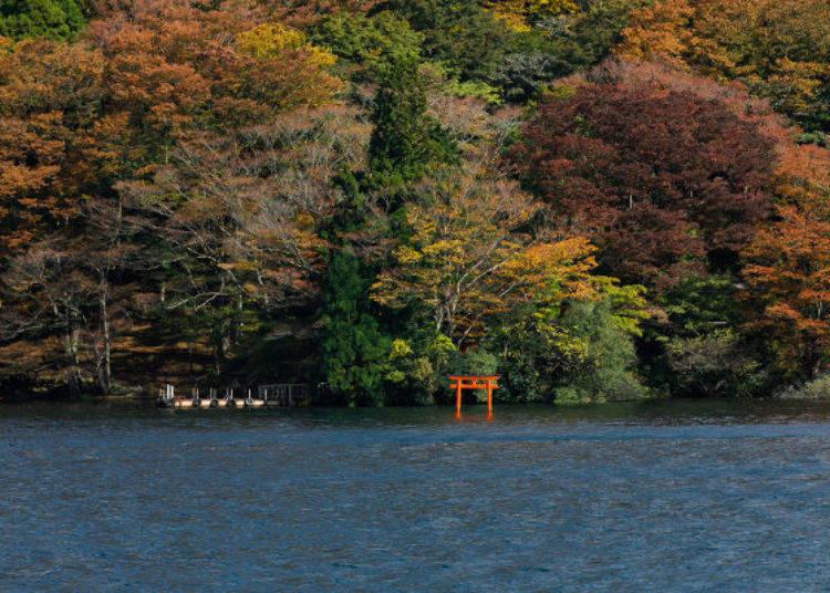 ▲九頭龍神社矗立湖上的大紅色鳥居,在紅葉襯托之下更有fu