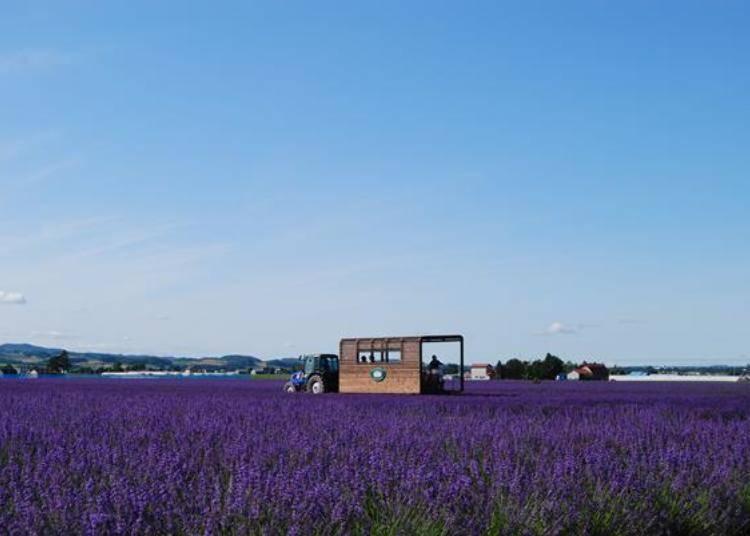 在夢幻紫色的薰衣草花田裡漫遊,繞一圈約15~20分鐘。