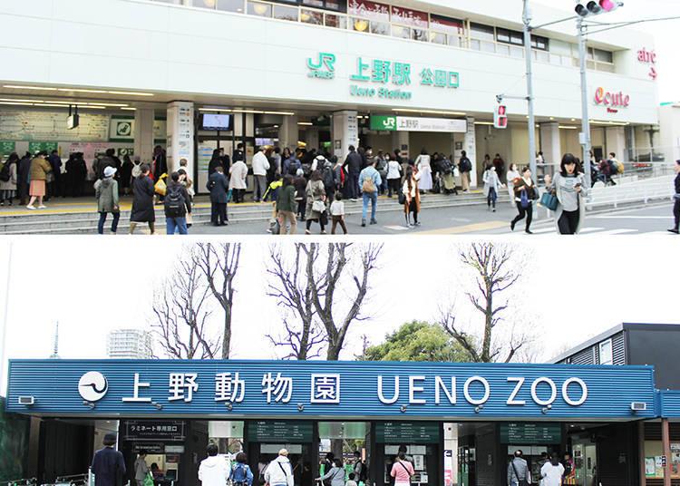 從JR上野車站的公園口(上)徒步5分鐘便能到達上野動物園的「表門」。如果想避免擁擠人潮的話,建議從不忍口的「辨天門」