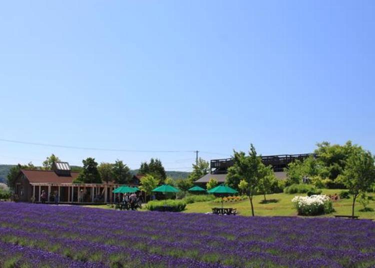 風香之丘和展望平台的旁邊就是「Lavare之舍」,有販賣薰衣草系列商品和輕食喔!
