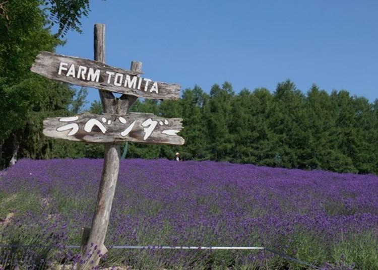 富良野農場的薰衣草田。一點也不誇張,只要說要去富良野觀光,欣賞薰衣草的話,全員都說要參加的高人氣景點!