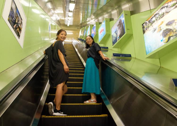 搭乘手扶梯往江島神社的邊津宮