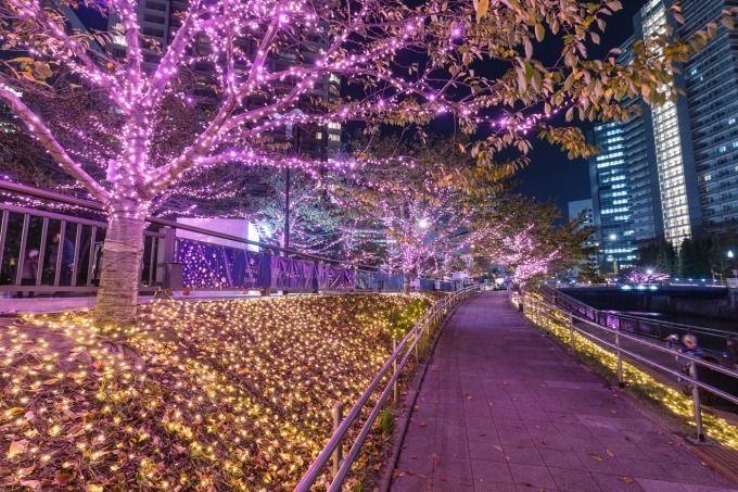 目黑川冬季燈飾2018