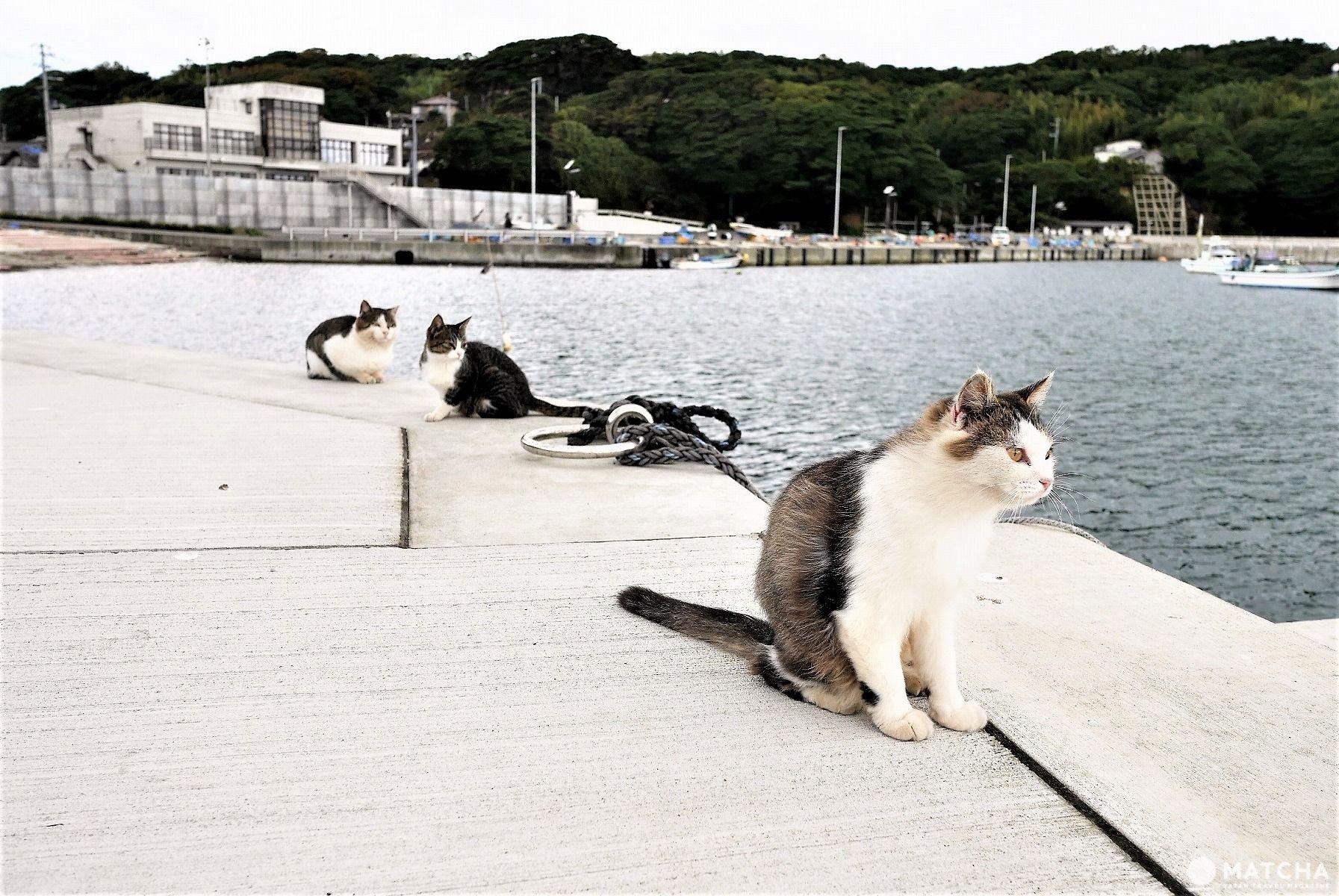 田代島のねこ