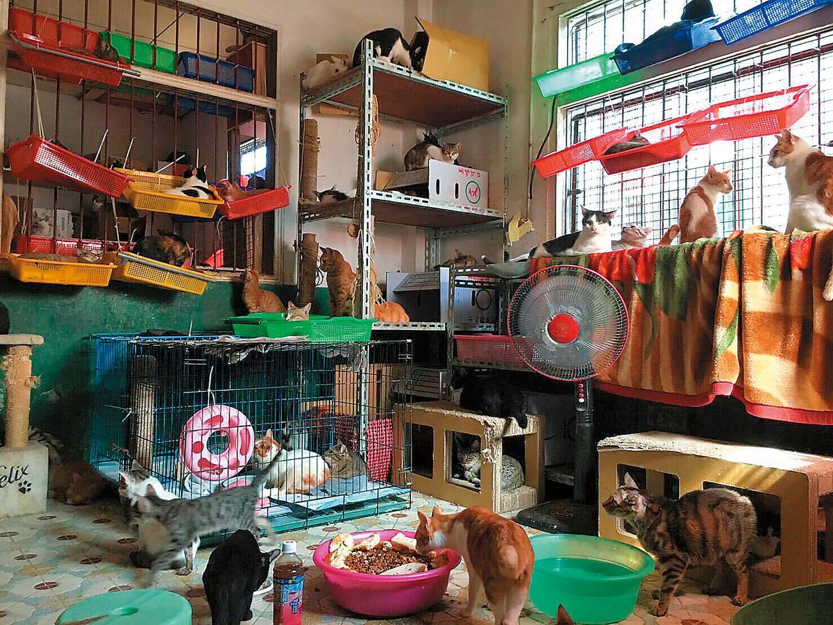悶熱的空間僅有1只電風扇轉動,對通風根本於事無補。臉盆內裝滿飼料還混雜麵包,多貓共食1盆。(讀者提供)