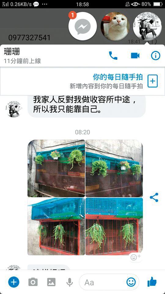 記者接獲消息,指盛女所買的盆栽,原來是要用來美化貓坑的外觀,所做的亡羊補牢之舉。(讀者提供)
