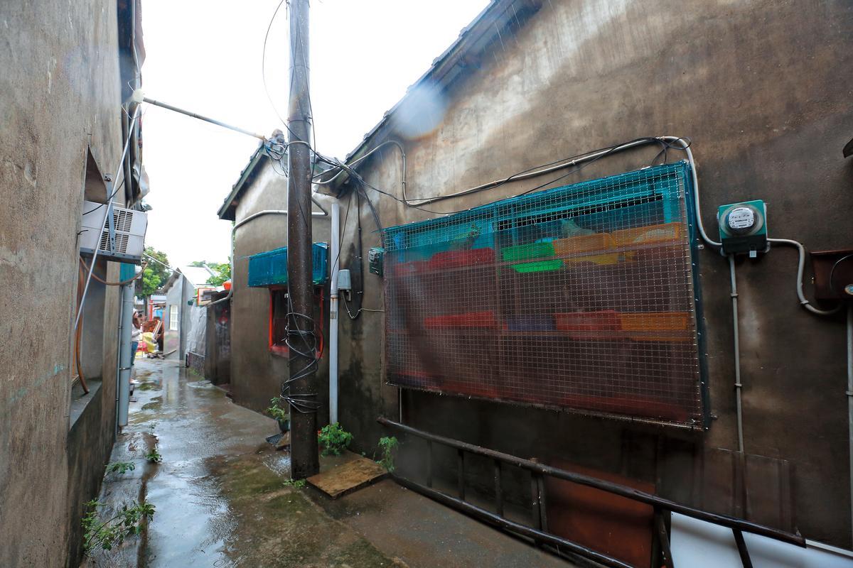 盛珊珊租下位於台中市西區的一處老舊平房,將近百隻的貓全集中在屋內。